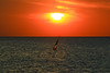 wind-surfing & sailing at sunset - Hertzelia beach