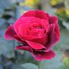 Kwiat (madrider512) Tags: red flower macro closeup petals bokeh kwiat płatki