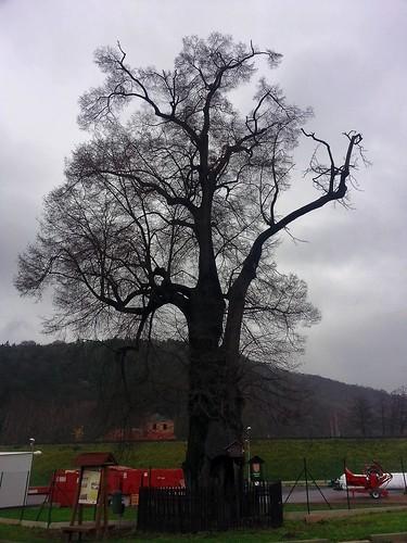 A památný strom u něj.