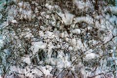 Multiple Nature 312 (pni) Tags: snow suomi finland helsinki bush multipleexposure twig helsingfors tripleexposure multiexposure skrubu pni pekkanikrus