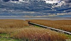 Am Bodden (garzer06) Tags: deutschland wasser natur himmel wolken insel gelb blau rügen schilf vorpommern steg bodden mecklenburgvorpommern bootssteg landscapephotography naturfotografie inselrügen wolkenhimmel landschaftsbild landschaftsfotografie naturephotograpphy