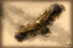 Watching from the sky (MarcialCG) Tags: abstract bird texture textura photoshop vulture draw dibujo buitre gypsfulvus