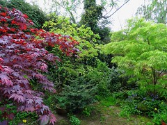 Acers (Miskatonic Nick) Tags: acers