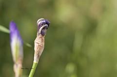 _DSC0749 eclosin (Rodo Lpez) Tags: espaa naturaleza flores flower sol nature spain nikon flickr flor leon elcampo sentimientos elbierzo castillayleon nikonistas floresdeespaa naturalezacautivadora castillayleonesvida floresdelen floresdecastillayleon naturebynikon