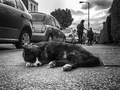 #6 - Shoot Whatever You Like Without An Instruction (Jomak1) Tags: street sleeping sky pet white black london monochrome cat children photography nap moody pavement path mother may pedestrian vehicles parked footpath putney 2016 jomak1 streetandrepeat106