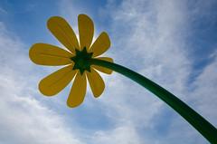 Big Blossom (JeffStewartPhotos) Tags: park flowers toronto ontario canada flower playground stclair photowalk parkland splashpad torontophotowalk topw viellastreet torontophotowalks gunnsroad topwsc mapleclairepark tarragonaboulevard