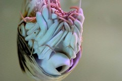 Perlboot (Nautilus) (to.wi) Tags: zoo nautilus wilhelma perlboot towi