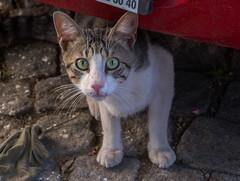 IMGP2548-2 (UmitCukurel) Tags: nightphotography sea night cat turkey puente mar pentax turkiye istanbul gato turquia bogazici bosphorus kedi kizkulesi maidentower k3ii