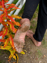 Vibrant autumn colour (Barefoot Adventurer) Tags: texture earth barefoot barefeet barefooted earthing barfuss barefooting barefoothiking strongfeet barefooter baresoles leathersoles toughsoles wrinkledsoles earthsoles autumnsoles autumnbarefooting earthstainedsoles