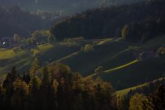 Massive Waves (Role Bigler) Tags: wood nature forest schweiz switzerland waves suisse hill natur wave wald hilly warmlight eveninglight wellen emmental abendlicht grasland hgelig warmeslicht massivewaves 14xiii canoneos5dsr ef4070200isusml