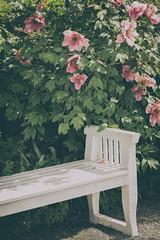 Happy Bench Monday - Munich Botanical Gardens (suzanne.gibson) Tags: flower bench outdoor botanicalgarden