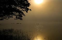 Golden Sun (SueZinVT) Tags: duck fog sunrise trees silhouettes