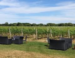 image (irischao) Tags: summer vineyard winetasting northfork 2016 suffolkcounty sparklingpointewinery longislandnewyork