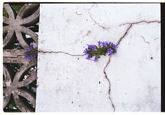 Cracking (Camomelle) Tags: flowers urban colour detail brick london texture film wall environment cracks