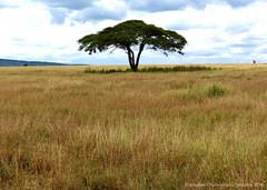 Serengeti National Park (charbonjoh) Tags: tanzania serengetinationalpark naturemasterclass