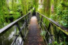 Day #3061 (cazphoto.co.uk) Tags: bridge trees lumix panasonic essex weeping willows braintree ortoneffect project366 180516 dmcgh3 panasonic1235mmf28lumixgxvarioasphpowerois beyond2922