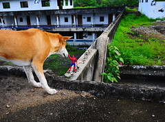 ,, Big Day At The Dog Palace ,, (Jon in Thailand) Tags: roof dog pumpkin hands nikon spiderman freaky jungle nikkor superpower d300 175528 littledoglaughedstories thedogpalace