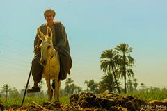 ... (Ahmed Dardig) Tags: africa travel trees man photography egypt streetportrait explore egyptian explored sohag southegypt