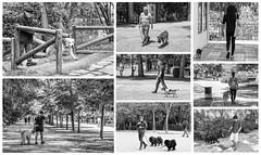 Amigos (SinRaquel) Tags: parque amigo perros retiro