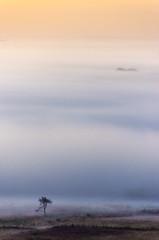 brume Yeun Elez (berjanic) Tags: france bretagne finistere montsdarrée yeunelez brennilis botmeur stmichel brume mist matin morning arbre tree landscapesshotinportraitformat