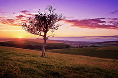 The Resolute Oaks IV (Langstone Joe) Tags: meonvalley oldwinchesterhill meon hampshire oak oaktree resolute windswept downland chalk valley sunset lonetree