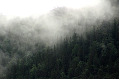 Misty morning (Ib Aarmo) Tags: mist misty morning wood woods trees outdoor nature