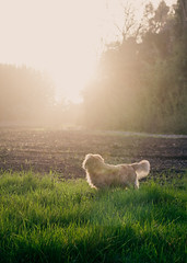 my Dog (Eliecer Gallegos) Tags: dog mydog doglover landscape field countryside luz