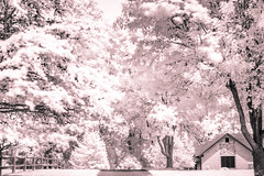 PhotoChallenge Wk 30 Infrared w/ man made (kimedwards1123) Tags: infrared landscape tree home d7200 50mm filter photochallenge