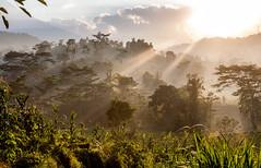 Bali sunrise II (Bart Weerdenburg) Tags: bali indonesia sidemen sideman sunrise sun mist misty morning ricefields rijstvelden zonsopkomst zonsopgang nature natuur