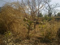 garden (Sasha India) Tags:              ometepeisland ometepe nicaragua journey travel             eljardindelavida puntagorda balgue