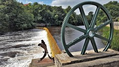 Spawning Salmon - Wetherby (Paul Thackray) Tags: yorkshire westyorkshire wetherby riverwharfe spawningsalmon michaelliesener sculpture 2016
