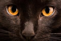 Coffl (Zac_Townsend) Tags: cats cateye kitty kitten eyes cute