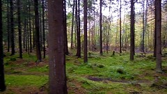 Uutela (timo_w2s) Tags: helsinki finland autumn uutela trees firtrees forest wood moss aurinkoilahti