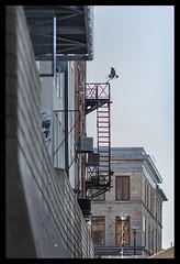 _MG_0059_s (dxyShen) Tags: cambridge ontario uwsa grandriver architecture canon 5dmkii nikon 200mm f2