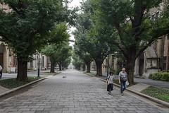 allee (kasa51) Tags: allee treelinedstreet people tokyouniversity tokyo japan ginkgo    stonepavement