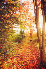 Walking a trail with my pup. (nature55) Tags: wisconsin mercer upnorth northernwisconsin fall autumn trail hiking dog sun colorful