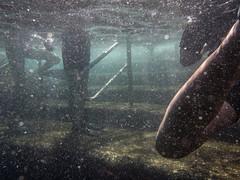 PA070672.jpg (Michael Bartosek) Tags: olympusepl3 catalinaisland olympus1442mm underwater catalina diving california pacificocean