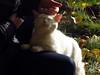 Bliss (AzIbiss) Tags: kokino animals bryansk pet people bliss twop canon powershot sx50 canonsx50 animal petting outdoor amateur canondigital hyperzoom salient