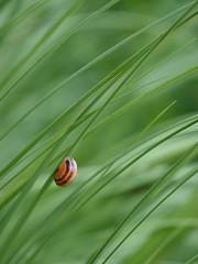Amateur de verdure ****-+O (Titole) Tags: escargot snail grass green herbe titole nicolefaton friendlychallenges thechallengefactory diamondsawards thumbsup gamesweepwinner challengegamewinner herowinner 15challengeswinner ultimategrindwinner challengeyouwinner storybookttwwinner