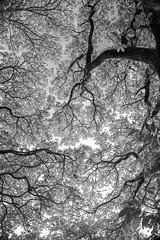 Luces y Sombras (juanfranciscogonzlezcarmona) Tags: naturaleza white black blanco canon y negro árbol imagen islascanarias ramas figura isladelapalma juanfranciscogonzálezcarmona