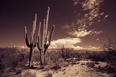 Saguaro National Park East - Tucson, Arizona (Andrea Moscato) Tags: park trees shadow cactus parco usa nature rock sonora clouds america landscape us sand nuvole unitedstates desert natural stones ombra natura national np saguaro sonoran roccia paesaggio deserto sabbia statiuniti naturale andreamoscato