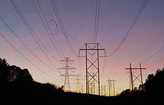 sunset (JulyRiver) Tags: sunset sky color bird clouds power line photostream