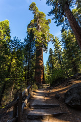 Kings Canyon & Sequoia - 89 (www.bazpics.com) Tags: california park ca usa tree nature america forest landscape us unitedstates large canyon kings national huge tall hume sequoia barryoneilphotography
