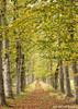 Little lane (Astrid Photography.) Tags: wood autumn trees nature netherlands landscape path autumncolors lane veluwe hulshorst bej astridphotography