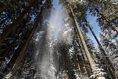 Schnee_Fall2 (Fuwa Photography) Tags: blue trees winter sky sun snow beautiful forest canon germany deutschland eos amazing dxo baden schwarzwald efs spaziergang weitwinkel hochschwarzwald 60d 1018mm