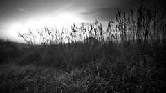 DSC01189-2 (Zapeet) Tags: morning sky grass sony tall nex nonhdr ilesdelamadelaine mpdquebec peteroates magdalenilands nex7