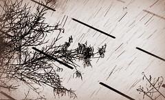 lineas (danielavpbu) Tags: madrid road street light shadow brown white snow black cold lines rain night contrast lights high nice branches rainy shade zen snowing feeling draw invert lineas grafito