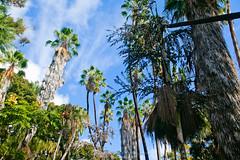 Jungle in the city (//ZERO) Tags: sandiego palmtrees jungle palmtree balboa urbanjungle balboapark balboaparkmuseum