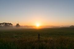 Otaua Sunrise (fate atc) Tags: newzealand colour fog sunrise fence still farm farmland nz waiuku earlymorningfog franklindistrict southauckland otaua