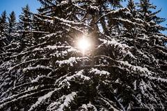 Tree-filtered sunlight (josefrancisco.salgado) Tags: snow france tree flora nikon europa europe nieve árbol nikkor d4 2470mmf28g rhã´nealpes megã¨ve